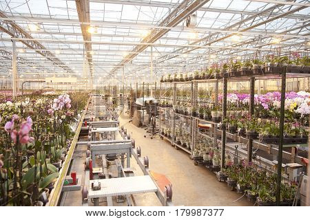 Workspace at orchid company for sorting orchids