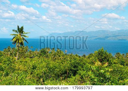 Tropical scenery with palm tree forest and sea. Philippines island hopping. Fresh greenery of exotic nature. Seaside scene with green forest. Distant island silhouette in afternoon sun. Blue sea view