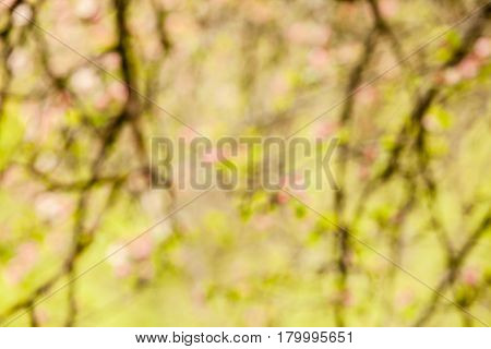 Branches of apple tree with pink flowers, natural blooming seasonal spring background. Copy space blurred backdrop version
