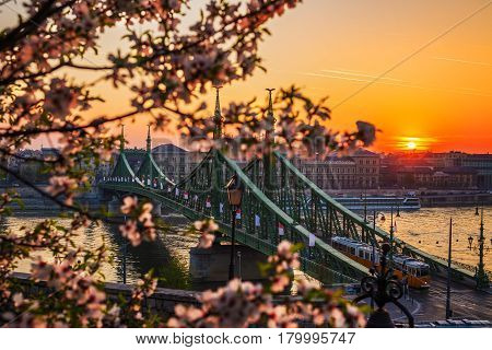 Budapest Hungary - Beautiful Liberty Bridge at sunrise with typical yellow Hungarian tram and cherry blossom. Spring has arrived in Budapest.