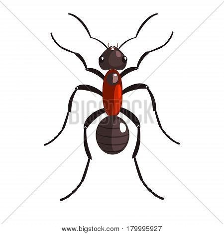 Black ant insect colorful colorful cartoon character isolated on a white background