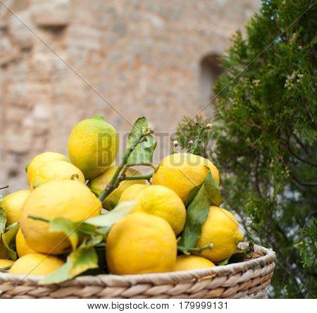 Fine ripe lemons in bowl