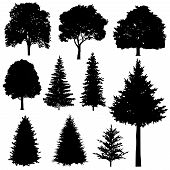 Forest coniferous and deciduous fir trees vector silhouettes set. Evergreen tree plant, illustration of silhouette wood tree poster