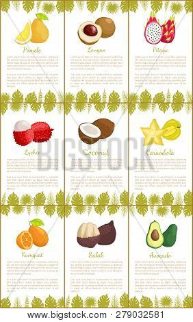 Pomelo And Longan Set Posters With Text Sample And Decorative Foliage Vector. Avocado And Exotic Lyc