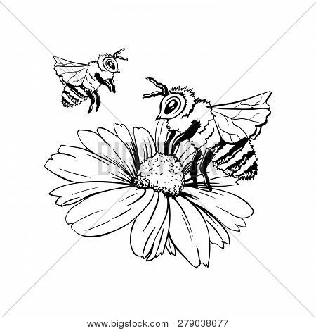 Chamomile Bud And Two Bees Or Group Of Wasps. Pollination Process. Hand Drawn Ink Pen Illustration,