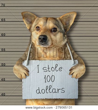 The Bad Dog Stole 100 Dollars. He Was Arrested For It.  Lineup Background.
