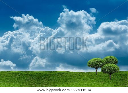 Grass And Sky