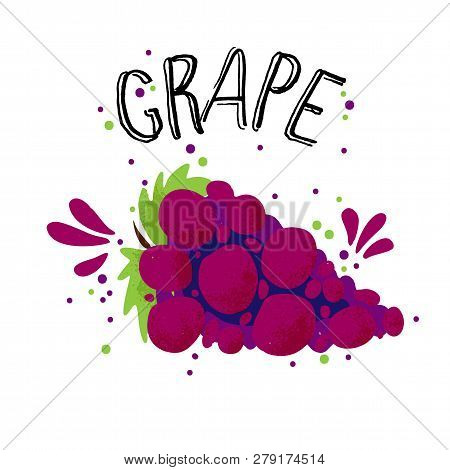 Vector Hand Draw Red Grape Illustration. Blue Grapes With Juice Splash Isolated On White Background.