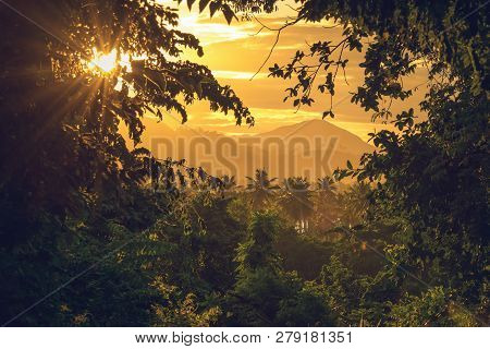 poster of Rainforest jungle nature landscape. Sunset in jungle nature. Jungle view. Nature. Sunset in nature. Natural environment. Forest nature. Stunning view in nature.View trough the jungle. Travel in nature. Traveling. Adventure