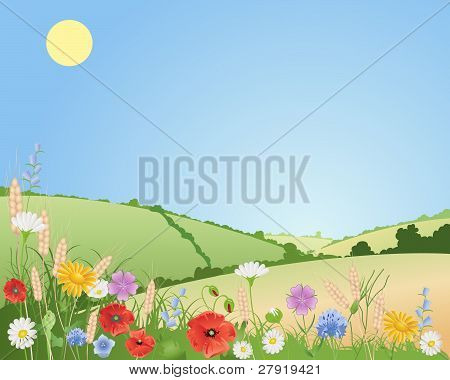 an illustration of summer wildflowers in a beautiful landscape with poppies daisies cornflowers harebells corncockles and wheat under a blue sky poster