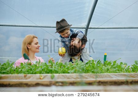 Plant Growing. Happy Family Growing Plant In Greenhouse. Plant Growing In Modern Greenhouse. Chils W