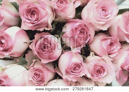 Beautiful Retro Soft Pink Rose Flower Background. Image Shot From Top View.