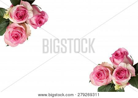 Beautiful Pink And White Rose Flowers With Leaves Isolated Over A White Background In A Frame.