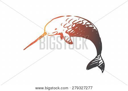 Swordfish, Sea, Water, Wildlife, Seafood Concept. Hand Drawn Swordfish In The Sea Concept Sketch. Is