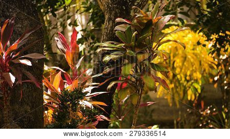Lush Foliage In Tropical Forest. Tropical Vegetation. Sun Shining To The Palm Leaf In Tropical Fores
