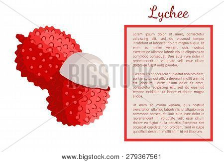 Lychee Exotic Juicy Fruit Whole And Cut Vector Poster. Litchi Liechee, Liche And Lizhi, Li Zhi, Or L