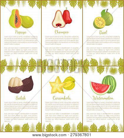 Papaya And Salak Posters Set With Text Sample Vector. Chompoo And Bael, Carambola Slices Star Exotic