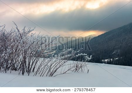 Bush On The Meadow In Mountain At Sunrise. Beautiful Winter Scenery. Overcast Gloomy Sky. Cold Weath