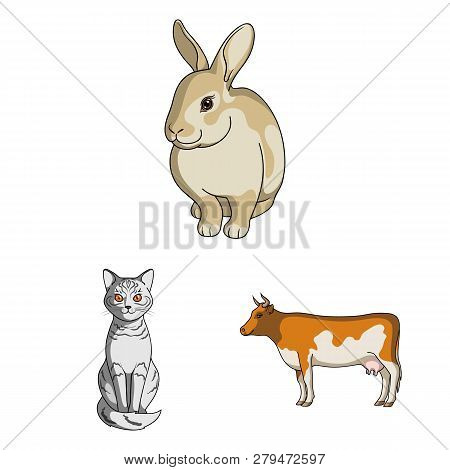 Vector Design Of Animal And Habitat Icon. Collection Of Animal And Farm Stock Vector Illustration.