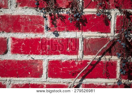 Red Brick Wall Framed By Leafy Foliage. Beautiful Wall Of Red Bricks Photographed In Close-up