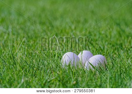 Close-up Of Three White Easter Eggs In Green Lawn