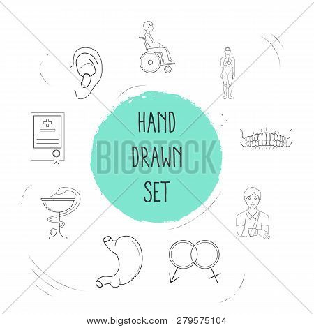 Set Of Anatomical Icons Line Style Symbols With Ear, Medical License, Sexology And Other Icons For Y