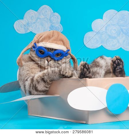 Very Funny Cat Pilot Of An Airplane With Glasses And A Pilot's Hat Sitting On A Plane, Against The B
