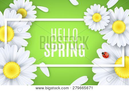 Hello Spring Greeting Card. Ladybug Creeps On The Flowers. Realistic Daisies. Text In Frame. Seasona