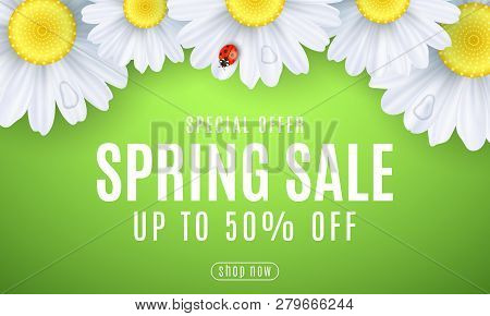 Spring Sale Banner. Ladybug Creeps On The Flowers. Realistic Daisies. Seasonal Design For Your Busin