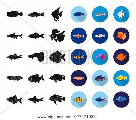 Different Types Of Fish Black, Flat Icons In Set Collection For Design. Marine And Aquarium Fish Vec