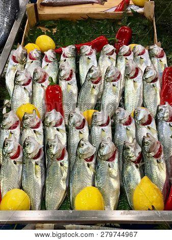 Raw Fresh Fish Bonito (bluefish, Lufer) For Sale In Market Bazaar In Istanbul