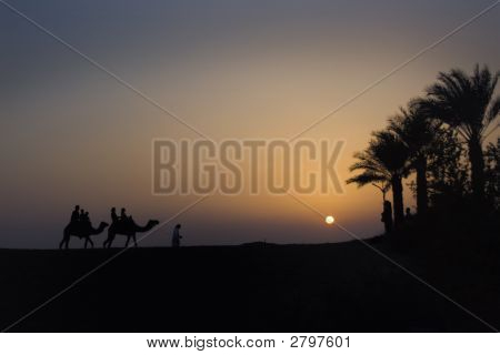Camel Train at dusk with sun setting over the desert poster