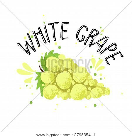 Vector Hand Draw White Grape Illustration. Yellow Grapes With Juice Splash Isolated On White Backgro