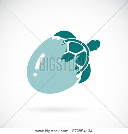 Vector Of Turtle Coming Out Of The Egg On A White Background,. Wild Animals. Easy Editable Layered V