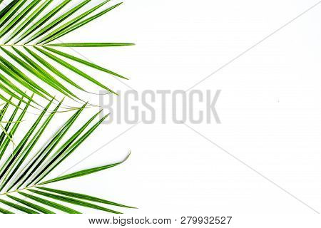Floral Concept With Green Leaves On White Background Top View Mock-up