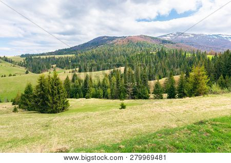 Beautiful Springtime Landscape In Mountains. Spruce Forest On A Grassy Meadow. Spots Of Snow On The