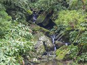 water spring cascade with moss and stones and lush green vegetation in the rainforest jungle at the end of the hiking trail in Faial da Terra, Sao Miguel island in Azores, Portugal poster