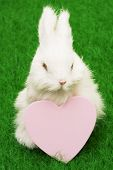 Easter bunny on grass with blank heart poster
