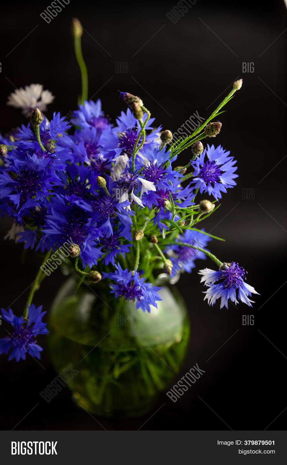 Cornflower Flower Image Photo Free Trial Bigstock