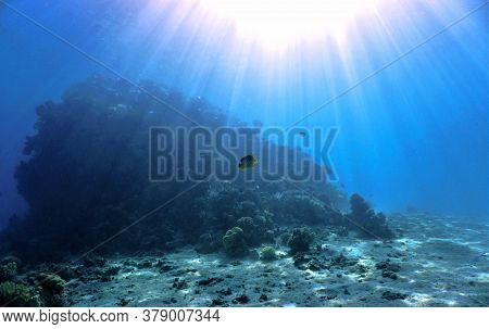 Underwater Photo Of Beautiful Sunlight Over The Coral Reef. From A Scuba Dive In The Red Sea In Egyp