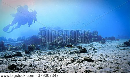 Underwater Photo Of Scuba Divers And Coral Reef In The Red Sea In Egypt.