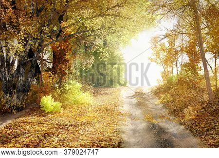 Fall Landscape, Bright Fall Trees And Yellow Fallen Leaves. Road In The Forest, Fall Colorful Nature
