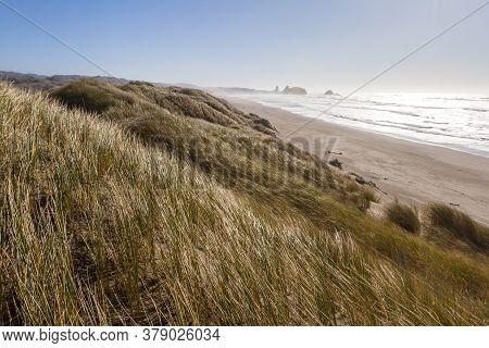 Grassy Dunes At Pistol River, Oregon