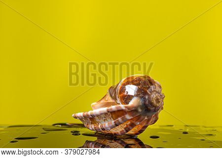 Wet Seashell On A Wet Yellow Background. Marine Inhabitant. Creative Photo Of A Seashell.
