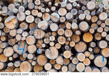 Felled Trees In The Forest, Folded Into A Stack. Logging, Forestry, Environmental Protection. Select
