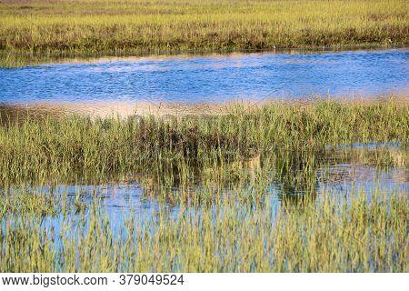 Tallgrasses Surrounding An Estuary Taken On Wetlands At The Newport Back Bay In Newport Beach, Ca