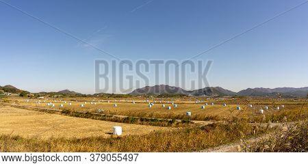 Field Full Of Straw Bales In Mokpo,south Jeolla,south Korea.