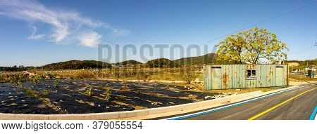 The Empty Vegetable Field Cover With Plastic For Cultivation In Suburb Of South Korea.