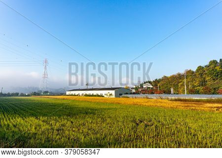 Daegu, South Korea - November 3, 2018: Rice Paddy Fields In Local Area Of South Korea With Town And