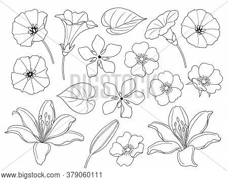 Contoured Simple Lily, Bindweed, Jog-rose Flowers Isolated On White Background. Floral Set Template